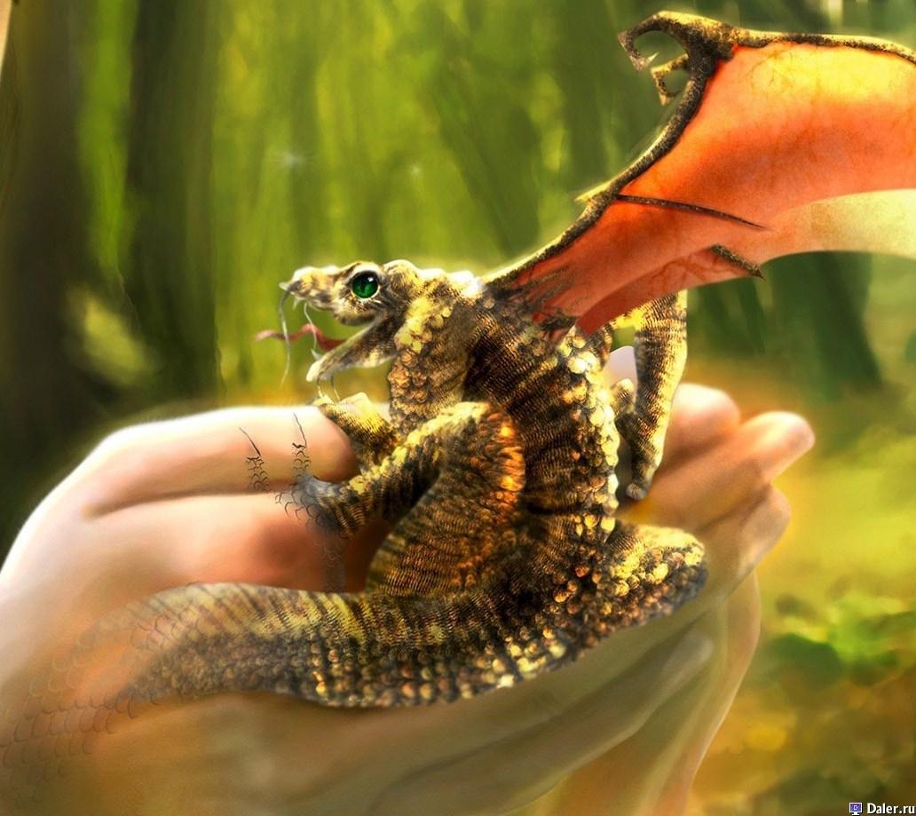 драконы фото в реальной жизни